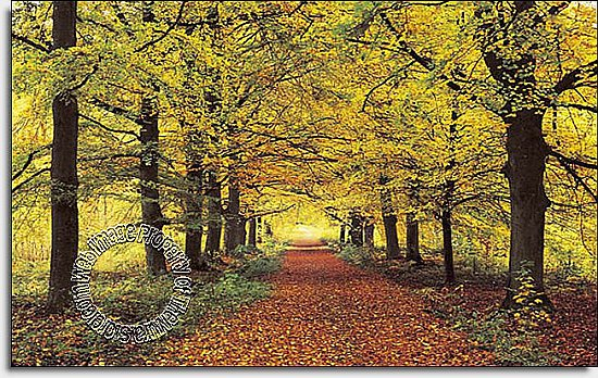 Forest Path Wall Mural 274 by Ideal Decor