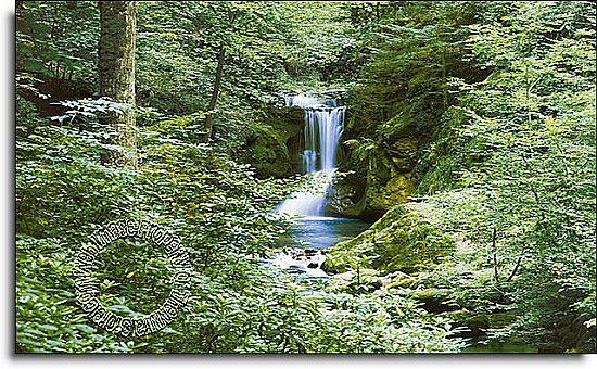 Waterfall In Spring Mural 279 DM279