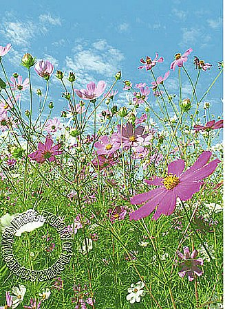 Flower Meadow Mural 367