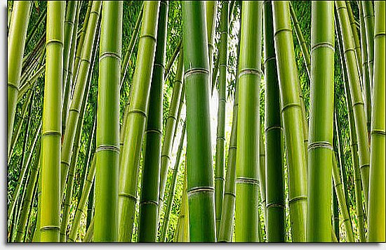 Bamboo Mural C866 by Environmental Graphics