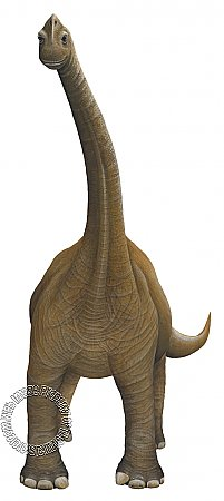 Bronchiosaurus Peel & Stick Applique 21182
