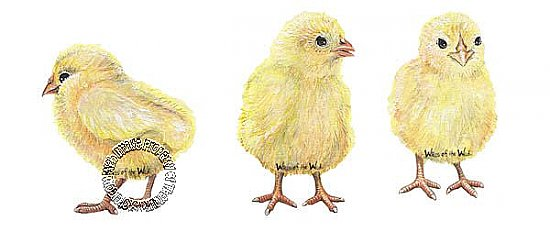 Chicks Peel & Stick Applique 30807