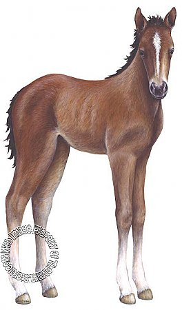 Foal Peel & Stick Applique 61600