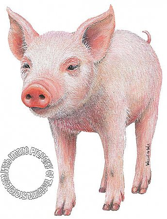 Pig 2 Peel & Stick Applique 160908