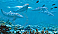 Dolphin Wall Mural MP4959M by York